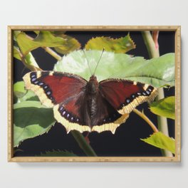 Mourning Cloak Butterfly at Rest on a Rose Leaf Serving Tray