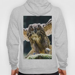 Eagle-owl landing on a stump Hoody