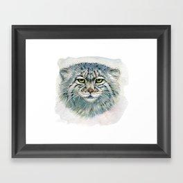 Pallas's cat 862 Framed Art Print