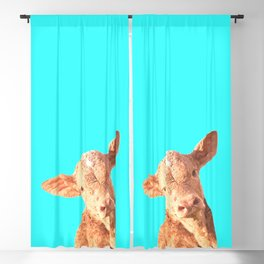 Baby Cow Turquoise Background Blackout Curtain