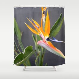 Multicolored Bird Of Paradise Flower Photograph Shower Curtain