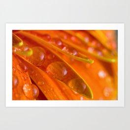 orange peas in a pod Art Print