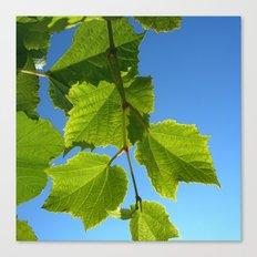 wine leafs Canvas Print