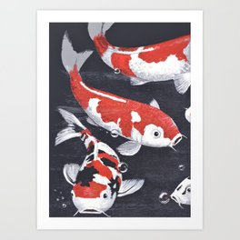Koi carp, orange, white and black ornamental fish swimming gracefully Art Print