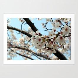 Jinhae Cherry Blossoms Art Print