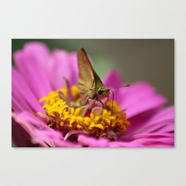Colorful Skipper Butterfly Canvas Print
