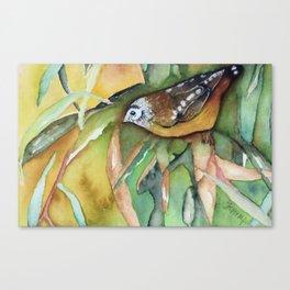 Perky Pardalote Canvas Print