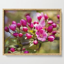 Crabapple Blossoms 6 Serving Tray
