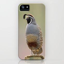 California Quail iPhone Case