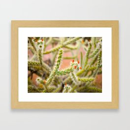 Tiny Baby Cactus With Red Flowers Framed Art Print