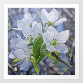Pear Blossoms Art Print