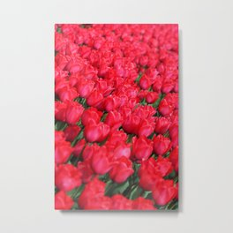 Carpet of Crimson Tulips Metal Print