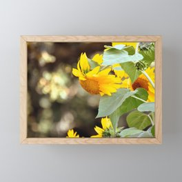 SUNFLOWER IN THE LATE AFTERNOON SUNLIGHT GLOW Framed Mini Art Print