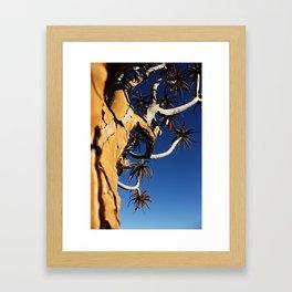 NAMIBIA ... Quiver Tree Framed Art Print