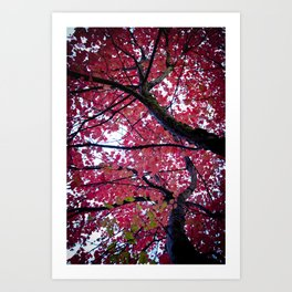 Autumn Lava Art Print