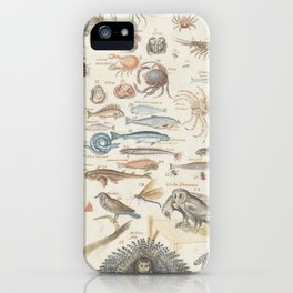 Vintage Natural History Scientific Illustration Chart, 16th Century iPhone Case