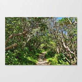 Craggy Gardens Walkway Canvas Print
