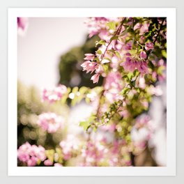Dream in Pink Bougainvilleas Art Print
