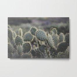 Sunset Cliffs Cactus Metal Print