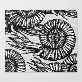 AMMONITE COLLECTION B&W Canvas Print