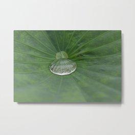 Droplet on a Lilyleaf Metal Print