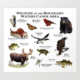 Wildlife of the Boundary Water Canoe Area Art Print