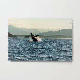 Humpback Whale Photography Print Metal Print