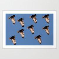 hawk Art Prints featuring Hawk by Mark Alder