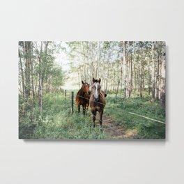Summer Horses Metal Print