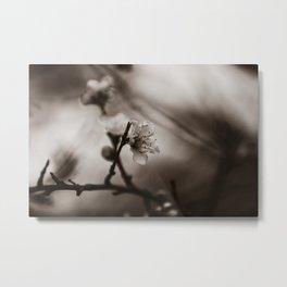 Spring Blossom, Black & White Metal Print