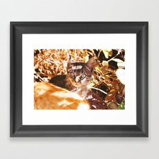 Cat in the shadows Framed Art Print