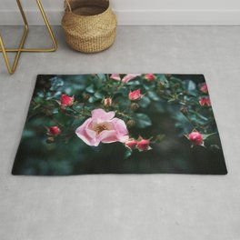 Pink Roses on Dark Teal Blue Green Rug