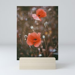 Poppy on 35mm Film. Analog Photography. Schwarzwald, Germany. Fine Art Nature Print. Wall Art. Mini Art Print