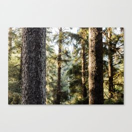 Sitka Forest Canvas Print