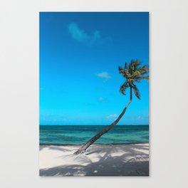 San Pedro Palm Canvas Print