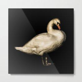 Mute Swan Portriat Metal Print