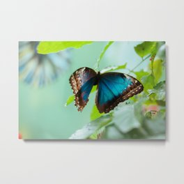Blue electrical morpho butterfly Metal Print