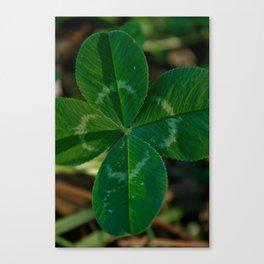 lucky 4 leaf clover Canvas Print