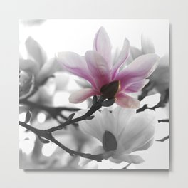#Springtime #magnolia #painting in #nature Metal Print