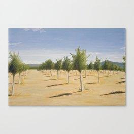 Pecan Grove Canvas Print