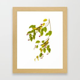 Carbonated Warbler Bird Framed Art Print