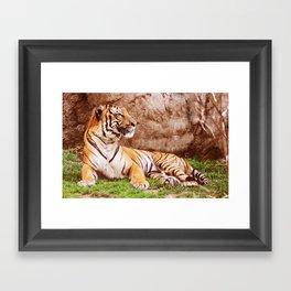 Malayan Tiger II Framed Art Print
