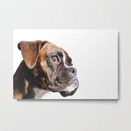 boxer dog portrait Metal Print