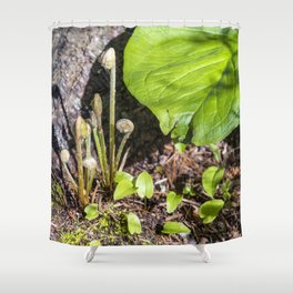 Spring fiddleheads Shower Curtain