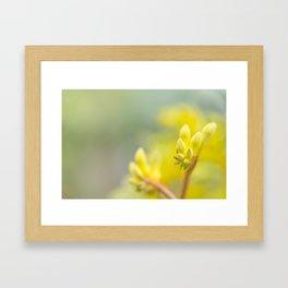 Bright Yellow Kangeroo Paw Framed Art Print