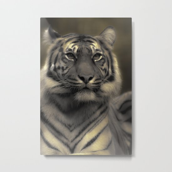 Golden Tiger 4 Metal Print