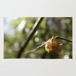 Cicada Shells Rug