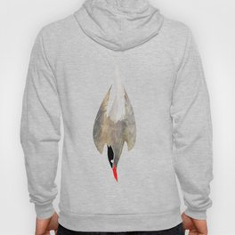 Arctic Tern Hoody