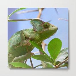 Exotic Animal Metal Print