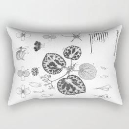 Begonia cabanillasii by Yu Pin Ang Rectangular Pillow